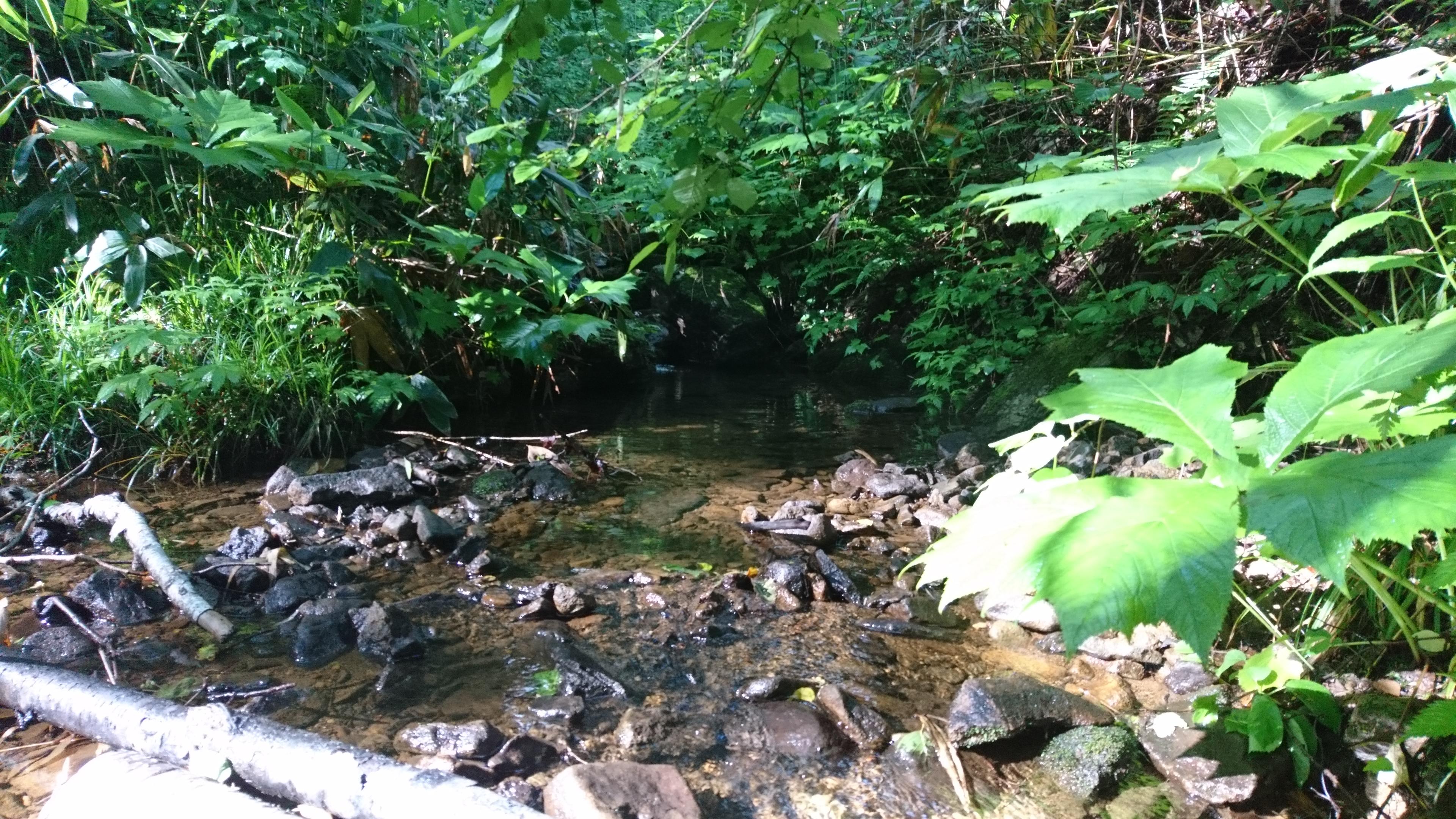 イワナのいた川
