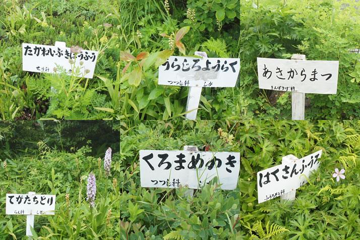 志賀高原ガイド【東館山絶景とお...
